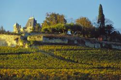 La Chapelle d'Ausone 2019 St Emilion