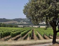 Brunello di Montalcino Pian del Vigne, Antinori 2015 Brunello di Montalcino